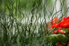 beetpflanzen10